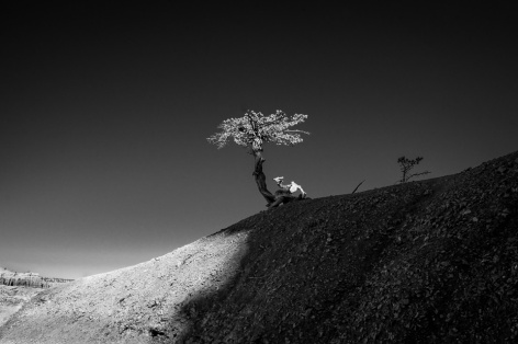 tree in the dark